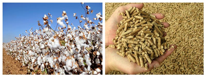 How to Make Cotton Stalk into Fuel Pellets